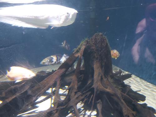 Sealife paris